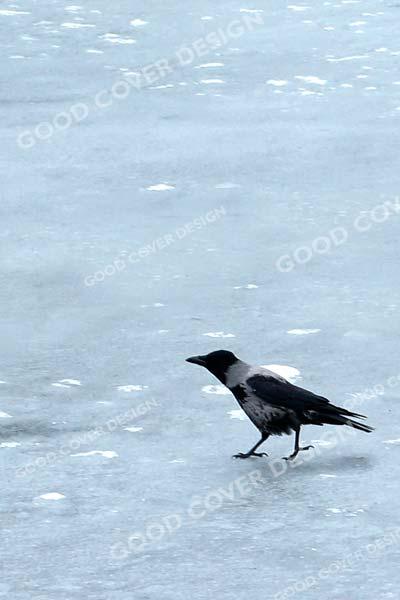 Ice Crow Cover Design