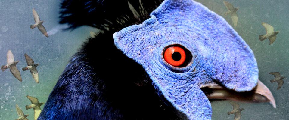 Bird Eye
