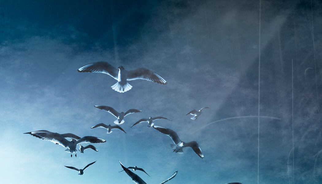 GCD Home Header Seagulls